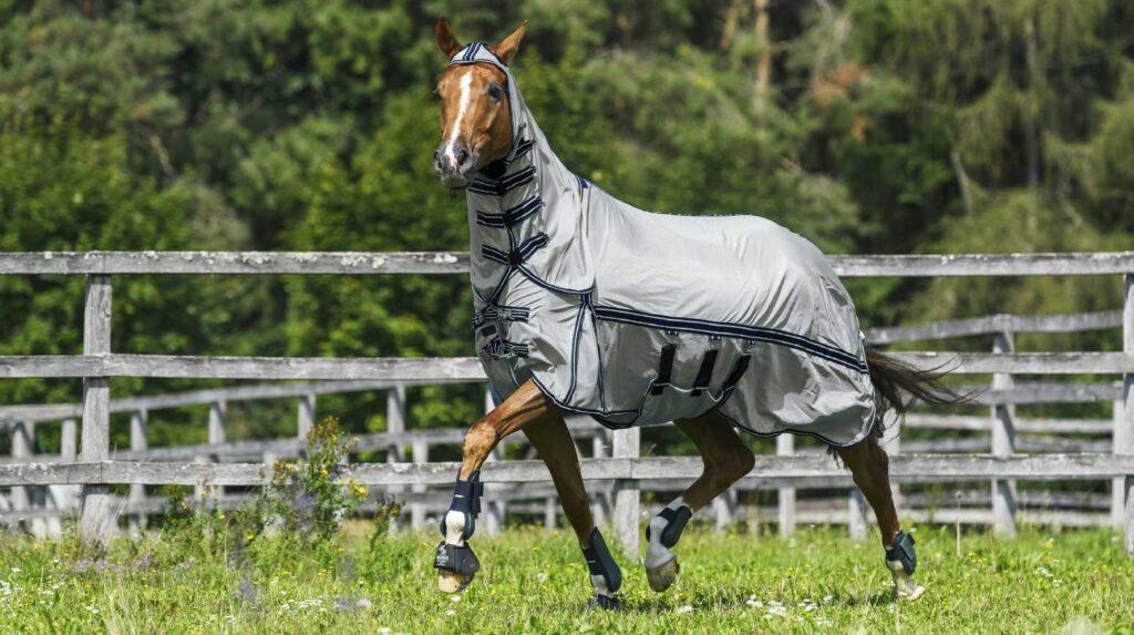 Pferd mit Fliegendecke