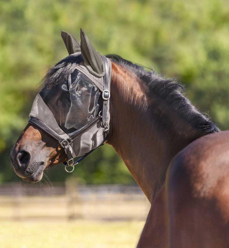 Pferd mit Fliegenmaske