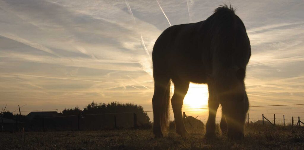 Pferd weide sonnenuntergang