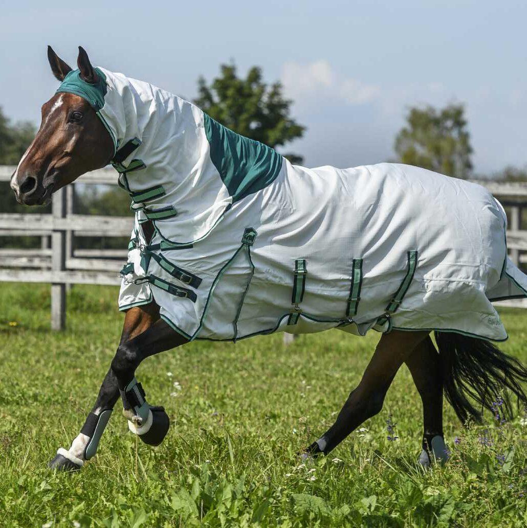 Pferd mit Ekzemerdecke