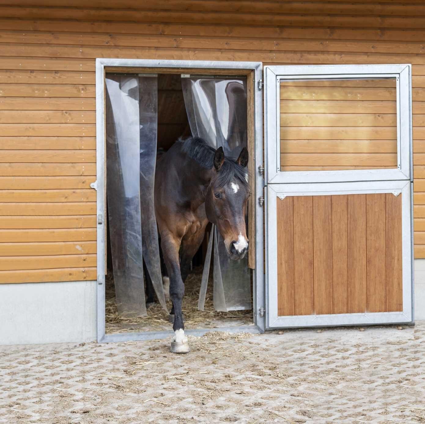Pferd kommt aus dem mit Streifenvorhängen versehenen Offenstall